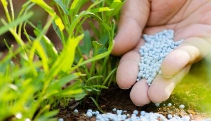 Эффективность минеральных удобрений снижают: промывка, плохая усвояемость растениями необходимых элементов из почвы из-за низкой температуры, недостаточная активность микроорганизмов