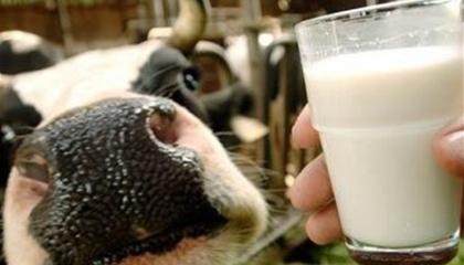 У Європі зберігається тенденція зниження виробництва молока. Показники листопада ще не опубліковані, але за оцінками операторів, темпи спаду зростають.