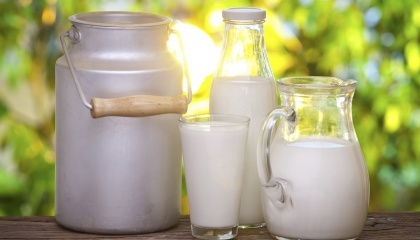 Сегодня у нас много расходных статей, не имеющих отношения к производству молока, покрываются за счет цены молока. Таким образом в хозяйствах перекрываются показатели и получаемая прибыль