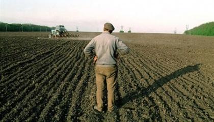 Ведущие украинские экономисты и лидеры мнений выступили с открытым письмом к народным депутатам о недопустимости остановки земельной реформы