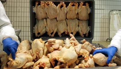 Заборона торкнеться м'яса птиці, виробленого в Австрії, Великій Британії, Угорщині, Болгарії, Греції, Німеччині, Італії, Нідерландах, Польщі, Румунії, Словаччині, Франції, Хорватії, Чехії та Швеції
