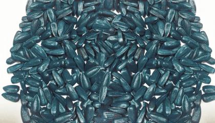 Компанія Nuseed виводить на український ринок гібридне насіння соняшника чорного кольору ТМ Onyx
