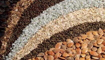 НААН планує разом з інвесторами будівництво 5–6 насіннєвих заводів, які будуть здійснювати доробку та фасування насіння