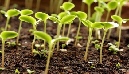 Владельцы сельскохозяйственных предприятий, имеющих земельный банк от 1 тыс га и плодовые насаждения от 50 га, могут построить завод по производству микоризообразующих препаратов для обеспечения собственных нужд