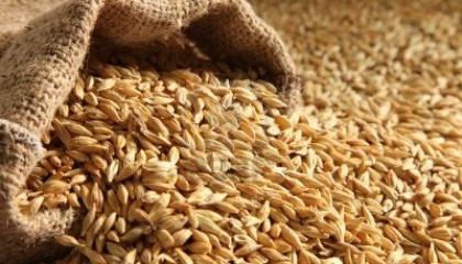 Якщо аграрій придбав контрафактне насіння і виявив це, то компанії-виробники насіннєвого та садивного матеріалу не несуть відповідальність за його якість