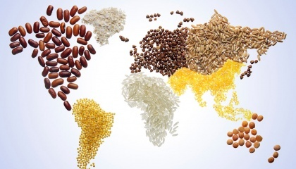 Воспользовавшись выбытием с рынка российской продукции, европейские компании вели активную работу по продвижению своих сортов пшеницы и ячменя, которые пользуются особым спросом в западных областях