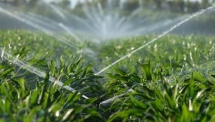 В США создали пестицид нового принципа действия под названием КропКоат, не похожий ни на один из существующих преператов