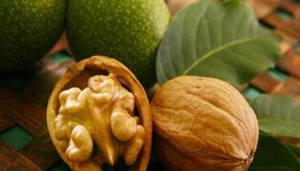 Цивілізоване виробництво по промисловому сортовому горіху в Україні тільки набирає обертів - закладаються горіхові сади з якісного посадкового матеріалу, забезпечується необхідний рівень агротехнологічного обслуговування садів