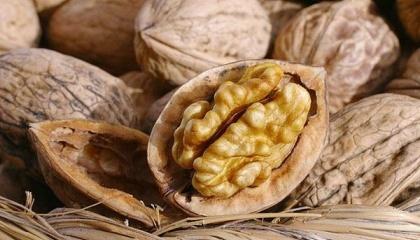 За різними оцінками тільки від 4 до 7% світового земельного фонду придатні для вирощування горіха волоського, в Україні цей показник більше 80%