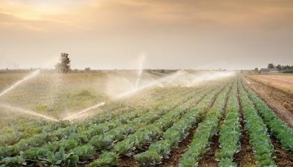 За оцінками ФАО, потенціал України дозволяє виробляти досить продовольства для того, щоб нагодувати 450-500 млн осіб