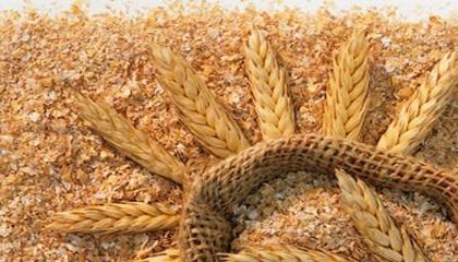 Єгипет активізував у цьому сезоні імпорт пшеничних висівок з України