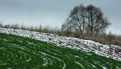 Прихід весни в Україні вже прийняв незворотний характер, через що зимові рецидиви будуть короткочасними, і накопиченої за зиму на полях вологи достатньо для того, щоб успішно відсіяти ярі