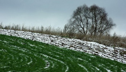Наступление весны в Украине уже приняло необратимый характер, ввиду чего зимние рецидивы будут кратковременными, и накопленной за зиму на полях влаги достаточно для того, чтобы успешно отсеять яровые