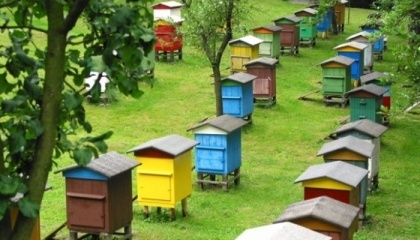 Украинские ученые разработали уникальную технологию, которая позволяет не только наблюдать за работой пчел, но и управлять процессом сбора меда. Специальное оборудование считает пчел, контролирует температурный режим, чистоту воздуха и количество собранного меда