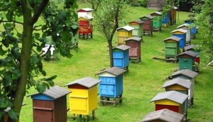 Профессиональная пасека - это 100 пчелосемей и больше. Пасека такого размера должна быть кочевой, то есть периодически переезжать с одной медоносной базы на другую. Оптимальный радиус кочевки - от 100 до 300 км