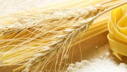 Американські селекціонери виявили, що твердість зерна не має відношення до якості «пасти» і вивели пшеницю, яка поєднує переваги м'яких і твердих сортів