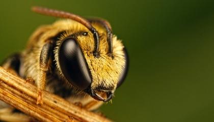 В селе Краснополь Житомирской области массово и внезапно погибли пчелы - 215 ульев на 14 дворах за одни сутки