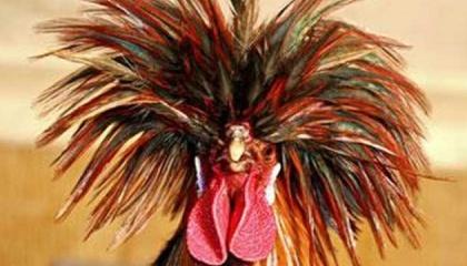 Екс-народний депутат-втікач України Олег Царьов зібрався будувати птахофабрику в окупованому Росією Криму за бюджетні гроші Росії