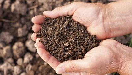Через відміну сівозміни до 60% земель заражені вірусами цукрового буряку, пшениці, кукурудзи та соняшнику