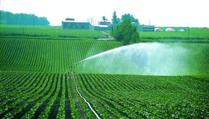 Зачастую утверждается, что высокая относительная влажность воздуха способствует усвоению питательных веществ, вносимых по листу. Однако это предположение, как правило, основано на интуиции, а не на фактах