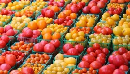 Кілька овочевих господарств висунули ультиматум торговельним мережам