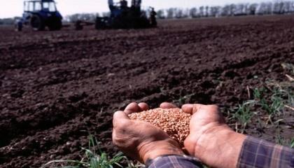 Наибольшая доля в структуре посевов будет принадлежать пшенице - 23,6%. Второе место у подсолнечника - 20%, далее идет кукуруза на зерно - 16,4%. Также достаточно большие площади аграрии отведут под ячмень и сою - 9,7% и 7,2% соответственно