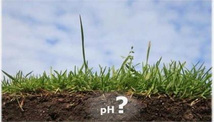 Согласно результатам исследования Института земледелия НААН, после внесения доломитовой муки в дозе 2 т на га урожайность озимой пшеницы повысилась на 20%, кукурузы - на 15%, семян подсолнечника - на 13%, сахарной свеклы - на 10%