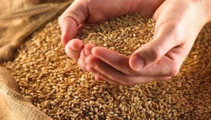 В Україні зафіксовано другий за величиною показник, - 3,8 т/га в сезоні 2015/16. Згідно з прогнозами USDA в 2016/17 МР в нашій країні врожайність пшениці стане ще вище і досягне 4,2 т/га