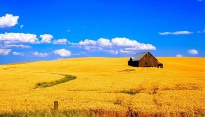 За англійською технологією потенціал врожаю визначається перед входом в зиму, якщо вийшли на поле і бачите суцільний зелений килим - є урожайний початок, а якщо бачите землю крізь шильця, це втрачені можливості