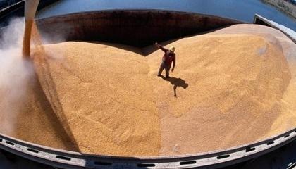 На мировом рынке Украине, в случае меньшего урожая проводить демпинговую политику, будет гораздо сложнее. Дополнительное давление украинское зерно будет чувствовать со стороны российского