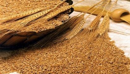 Экспорт пшеницы из региона ЧернЭкспорт пшеницы из региона Черного моря потеснил Австралию на рынках Азии, поднявшись до рекордных объемов в прошлом месяцеого моря потеснил Австралию на рынках Азии, поднявшись до рекордных объемов в прошлом месяце