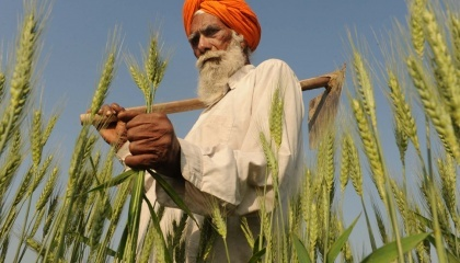Першу партію української пшениці - 52,1 тис. т Індія імпортувала ще в червні. У першому кварталі нового 2016/17 МР країна закупила ще 410,3 тис. т, а на сьогодні загальний обсяг поставок української зернової в цю країну з початку року вже перевищив 1 млн. т