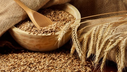 До конца 2016 г. из Украины будет отгружено на экспорт примерно 11 млн т украинской зерновой из прогнозируемых по итогам 2016/17 МГ 16-16,5 млн т