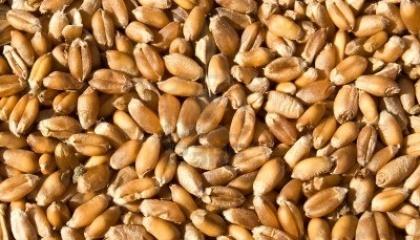 """По маргарину, пшенице и ячменю, срабатывает схема """"первый пришел - первый получил"""""""