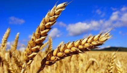 Якість продукції, що експортується, зокрема пшениці з Чорноморського регіону, - одна з кращих в світі. За вмістом білка зерно краще, ніж аргентинське або австралійське