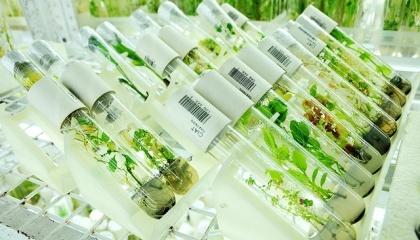 EFSA опубликовал дополнительные рекомендации по оценке аллергенности генетически модифицированных растений