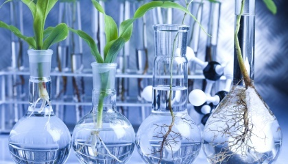 Нідерланди вважають, що нові методи селекції рослин не повинні підпадати під законодавство про ГМО, оскільки вони такі ж безпечні, як традиційне розведення
