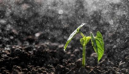 Стоит знать: наличие элементов питания в почве еще не является гарантией их попадания в растения