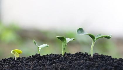 Наявність у ґрунті достатньої кількості азоту є чи не найважливішим фактором, який впливає на урожайність культури. Збагачені азотом рослини дають у підсумку високі врожаї