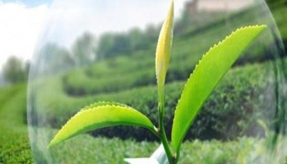 Компанії Syngenta і Adama укладуть з компанією Nufarm угоду про передачу прав на продаж низки засобів захисту рослин