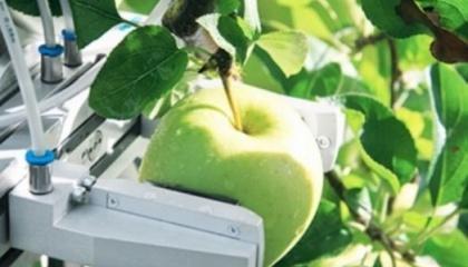 У Білорусі почнуть випускати роботів для збирання яблук