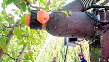 Компания Abundand Robotics создала робота, который умеет очень быстро собирать яблоки по принципу пылесоса, не повреждая при этом плод