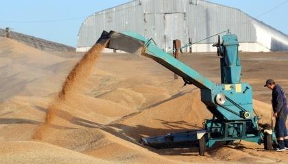 Российские  аграрии будут вынуждены продавать зерно по невыгодным для себя ценам с целью высвободить площади для нового урожая