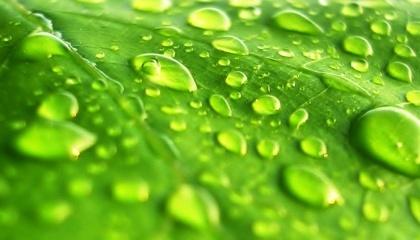 Листовая подкормка доставляет питательные вещества непосредственно к листьям – минуя почву - посредством чего действует быстрее и предотвращает потери питательных веществ в результате выщелачивания и иммобилизации в почве