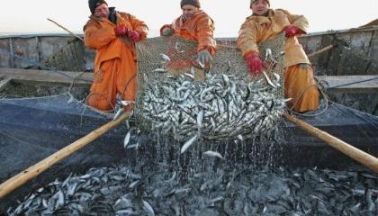 Ресурси Азовського моря практично знищені: зі 40 промислових видів риб для повноцінного вилову залишилося тільки три (тюлька, бичок і хамса), інші виловлюються в мізерній кількості