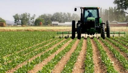 Подавляющее большинство фермерских хозяйств имеет в обработке небольшие площади земель, которые могут обрабатываться с участием исключительно членов семьи фермерского хозяйства