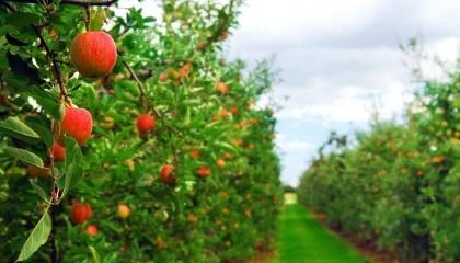 На сьогоднішній день дуже багато українських виробників фруктів і ягід постачають свою продукцію на європейський ринок, ринки Сербії, Індонезії, Лівії та інших країн