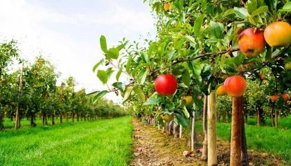 Прийнято рішення виділити на державну підтримку розвитку хмелярства, закладення молодих садів, виноградників та ягідників і нагляд за ними додаткових 224,3 млн грн