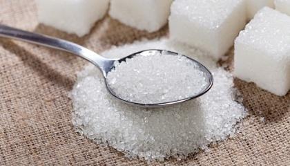 Якщо 2015 року Киргизстан та Казахстан були основними покупцями - 41,5 і 16,4 тис т відповідно, то в 2016 році найбільше цукру поїхало до Шрі-Ланки - 78,5 тис. т, Грузії - 49 тис. т та Тунісу - 32,7 тис. т