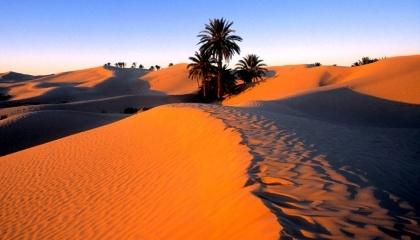 В ближайшие сто лет окраины и засушливые регионы Сахары станут зелеными и превратяться в саванну